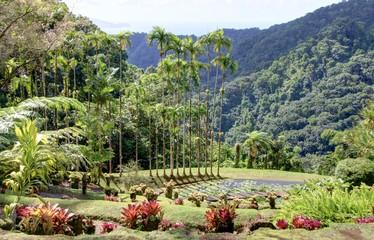 jardin exotique en Martinique