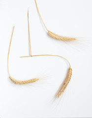 Wheat on white background, close up