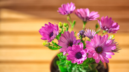 beautiful purple daisies with space for text