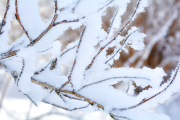 Winter branches of trees in frost snow flakes