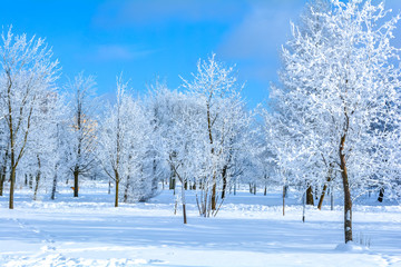 Winter landscape with trees with branches in frost snow flakes