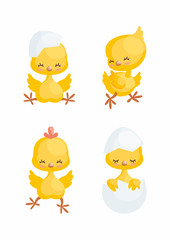 Cute little chickens in cartoon style. Vector illustrations set isolated on white background