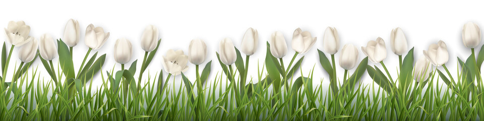 White tulips and grass. Realistic vector illustration.