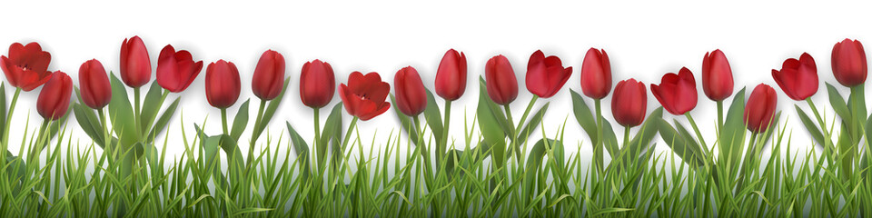 Red tulips and grass. Realistic vector illustration.
