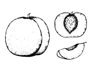 Fruit sketch black and white fruit sketch hand drawing isolated