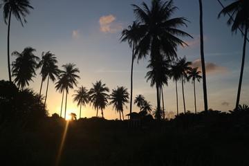 Sunnenuntergang unter Palmen romantisches abendrot