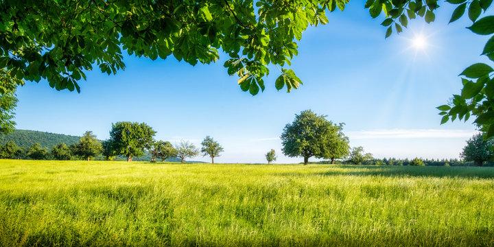 Grüne Wiese mit Obstbäumen bei Sonnenschein