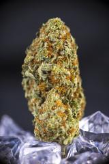 Macro detail of cannabis bud (sour tangie marijuana strain) isolated over black background