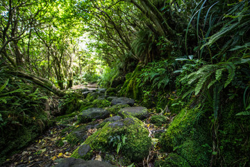 Moss covered path leading through Goblin Forest, New Zealand