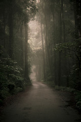 Moody hazy road scene in an overgrown forest.