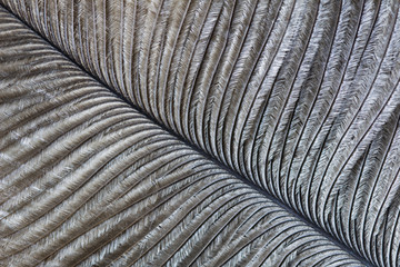 Macro image of an ostrich feather Wall mural