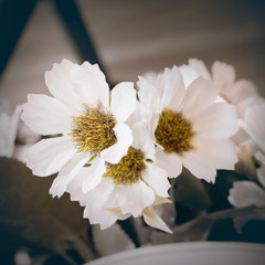 White flower and vintage tone concept.