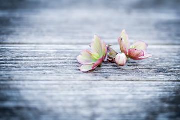 Blume auf Holzhintergrund