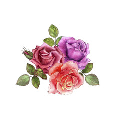watercolor drawing roses