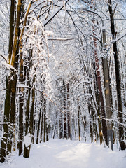 Picturesque picture of snowy trees in woods