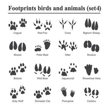 Wildlife animals and birds footprint, animal paw prints vector set. Footprints of variety of animals, illustration of black silhouette footprints.