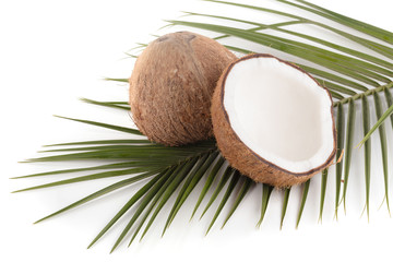 Coconut isolated on the white background. Tropical fruit coconut