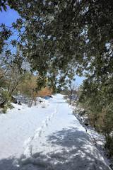 Fototapete - Footprint On Snow In Etna Park, Sicily