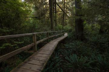 Beautiful wooden path thru the vibrant and green rain forest located near Tofino in Vancouver Island, British Columbia, Canada.