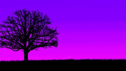 Evening Landscape Tree