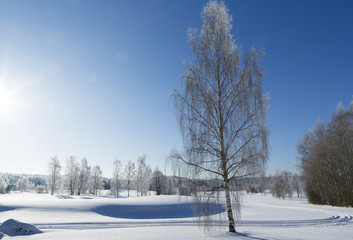 Beautiful wintry landscape image from Finland. Blue sky with sunshine and snow.