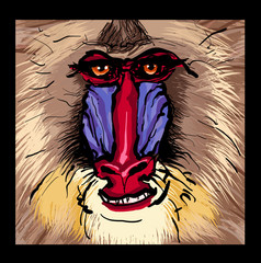Portrait of a mandrill primate