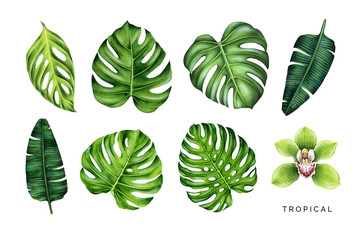 Tropical set. Green leaves and orchid flower. Hand painted watercolor illustrations isolated on white.