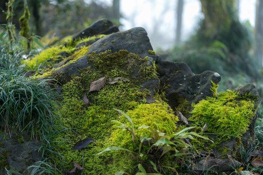 Green mossy rocks