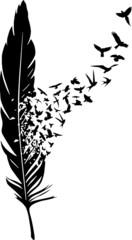 Feder löst sich in Vögel auf