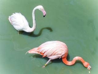Flamingo on the pond