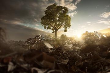 Baum wächst auf Mülldeponie