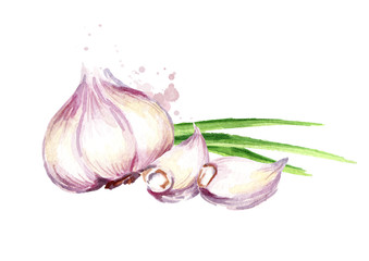 Garlic horizontal composition. Watercolor hand drawn illustration, isolated on white background