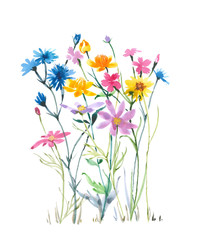 Romantic wild flowers. Watercolor flowers. Watercolor background.