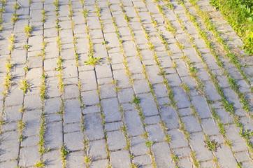 Брусчатка, поросшая травой