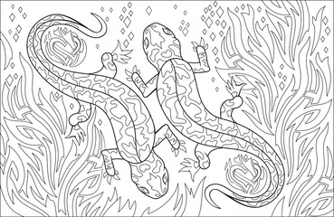 Black and white page for coloring. Drawing of couple salamanders. Worksheet for children and adults. Vector image.