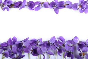 Wall Mural - Frame with violet.