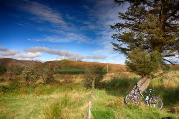 Mountain bike against pine tree over blue sky and green grass