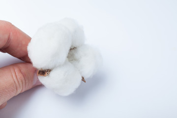 Hand holding cotton on a white background.