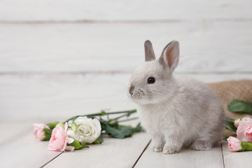 Easter bunny rabbit with spring flowers on white wooden planks, Easter holiday concept.