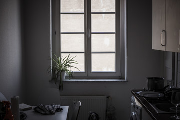Window in the kitchen