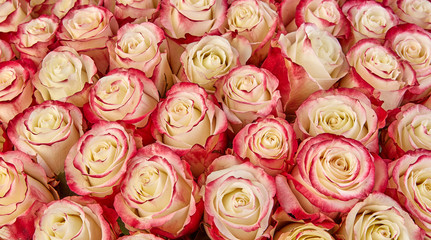 floral background. roses background