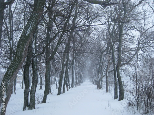 winter snow tree cold landscape forest nature frost trees