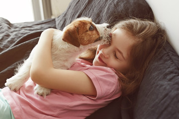 Jack Russell Terrier Puppy licks little child's face. Portrait of a Little Girl hugging a puppy at home.
