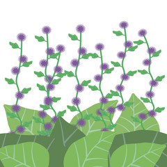 Violet and purple flowers of burr with green leaves of burdock