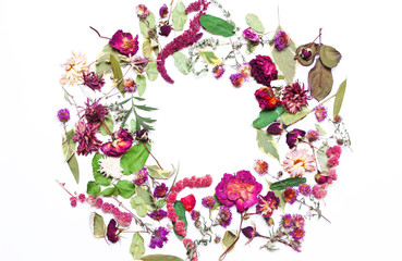 frame, card, rose decoration  floral