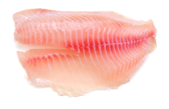Tilapia fillet, fresh water fish, isolated on white background