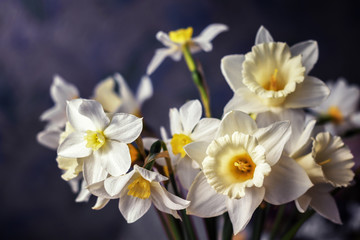 A bouquet of white daffodils