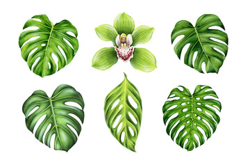 Tropical set. Monstera leaves and orchid flower. Hand painted watercolorillustrations isolated on white. Design elements for fabrics, invitations, clothes and other.