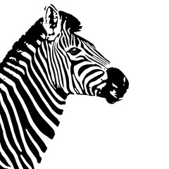 Black and white zebra profile. Equus quagga.