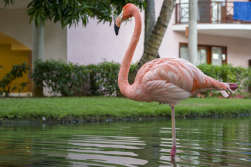 Beautiful pink flamingo